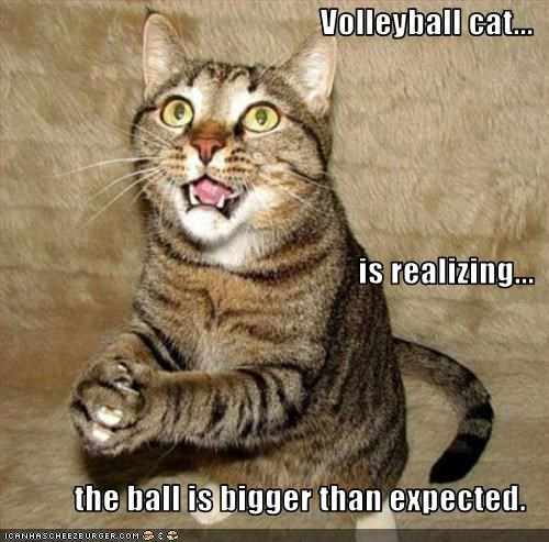 Volleyball Cat